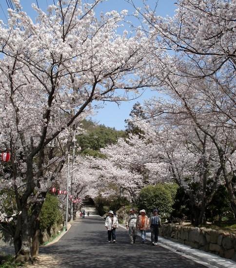 桜と熊野神社
